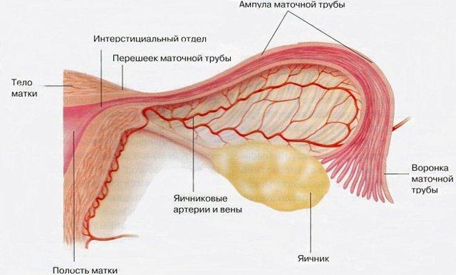 Аднексит: причины, симптомы, 11 этапов диагностики заболевания и современные способы лечения