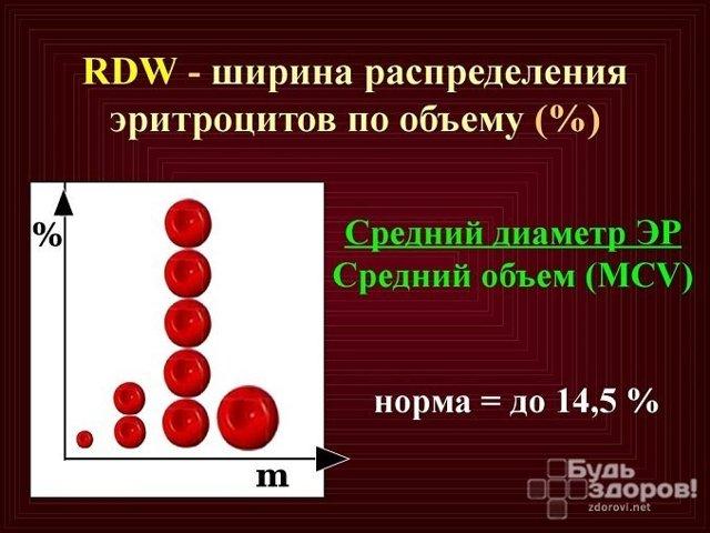 RDW в анализе крови: нормальные показатели, 6 причин повышения индекса