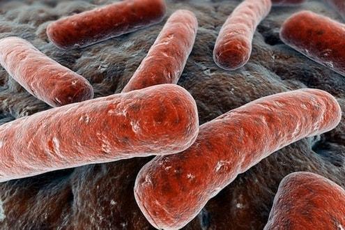 Анализ кала на дисбактериоз: более 10 разновидностей микроорганизмов и референсные значения по каждой из них