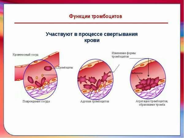 Геморрагический диатез: 5 ведущих симптомов, 6 принципов лечения и мнение врача-педиатра о профилактике