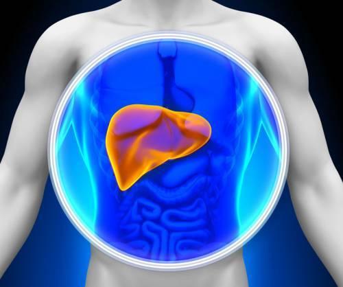 Аланинаминотрансфераза: 10 причин повышения уровня трансаминазы, о показаниях к исследованию и правилах подготовки к нему
