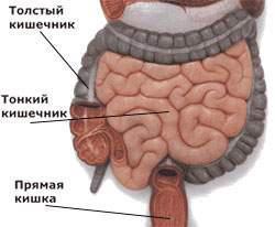 Пневматоз кишечника - симптомы, диагностика, лечение заболевания