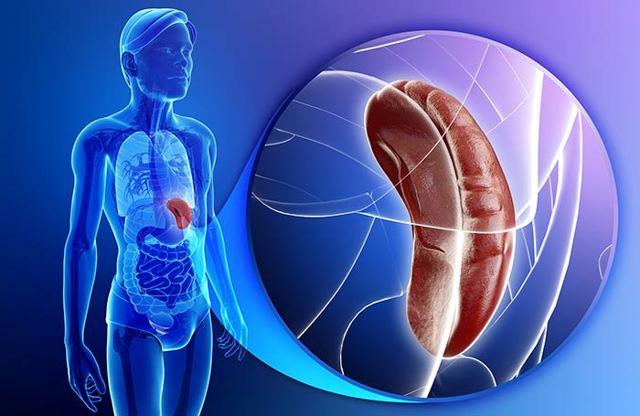Добавочная доля селезенки - симптомы, диагностика, лечение заболевания